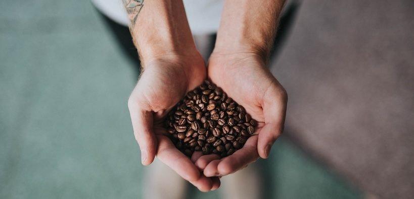 Harvesting Organic Coffee